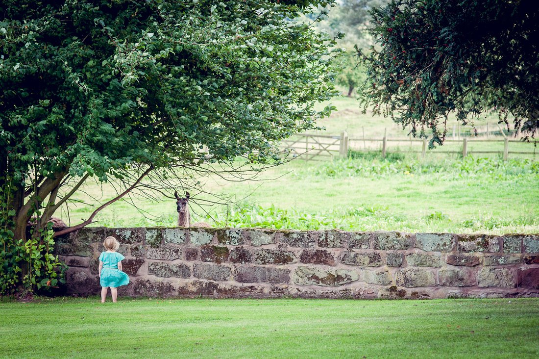 little girl looking at llama at Weston Hall in Staffordshire