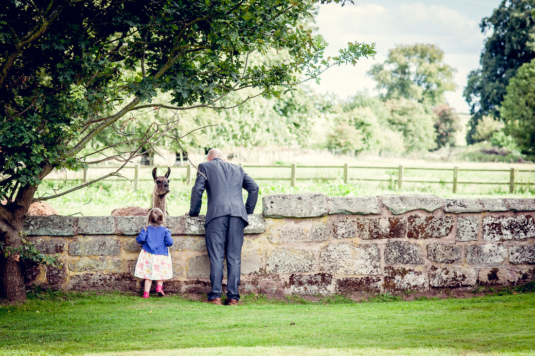little girl and dad looking at llama